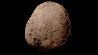 Снимка с... картоф беше продадена за 1 милион евро
