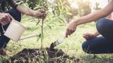 Колко дървета трябва да насадим, за да спасим планетата