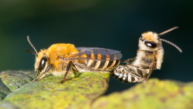 Пчелите винаги са били едни от най-любимите ни гадинки -