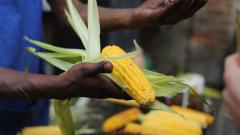 Затоплящата се планета срива добивите от зърнените култури