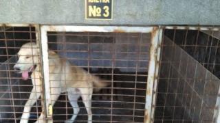 Кучешкият приют в Кръджали е добър, установи след проверка БАБХ