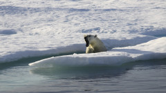 Време е да повярваме в глобалното затопляне