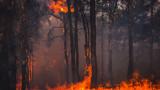 Три големи пожара горят в Пловдивско, не достигат пожарникари
