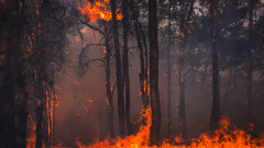 Горят стотици декари гора в Хасковско
