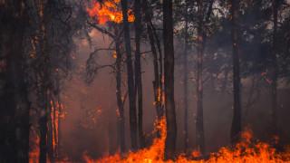 """Европарламентът обяви """"критично положение"""" с климата"""
