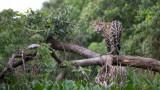 WWF, горите, животните в тях и какъв ще бъде ефектът от намаляването им наполовина