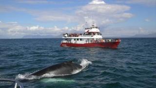 140 кита загинаха край бреговете на Австралия