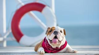 Кучетата и летните температури