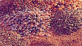 5% ръст на средната изкупна цена на пшеницата
