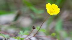 Растенията могат да взимат сложни решения