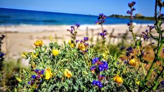 """Държавата търси концесионер за морски плаж """"Малък плаж – Лозенец"""""""