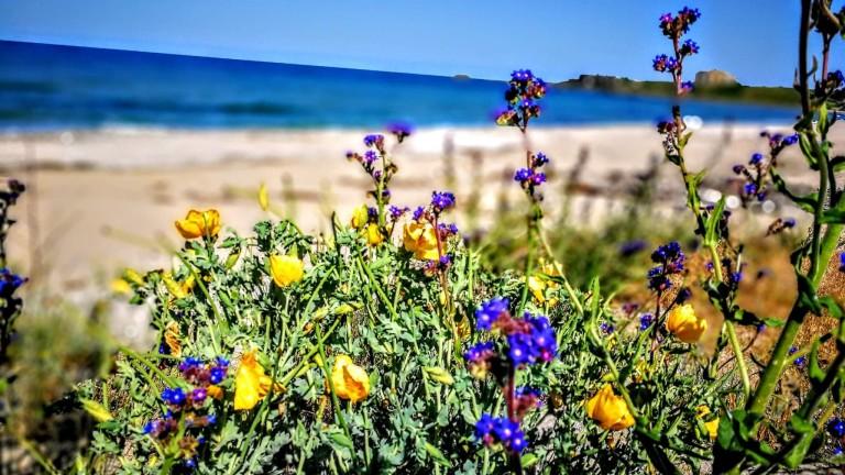Открива се процедура за възлагане на концесия за морски плаж