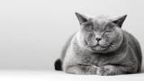 Котките, часовете, които прекарват в сън, и защо са толкова много