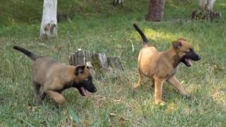 От БАБХ спрели на границата кучета и котки без документи
