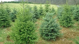 Как да направим Коледата по-зелена и по-забавна?