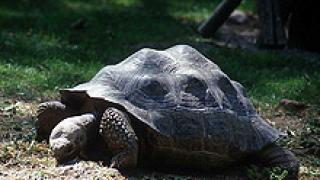 Осъдиха мъж за улов на костенурки от защитен вид