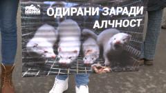 """От """"Четири лапи"""" настояват за пълна забрана за отглеждане на норки за кожи"""