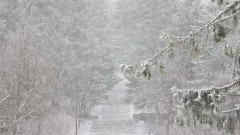 Сняг вали в 5 области, дъжд - в 14