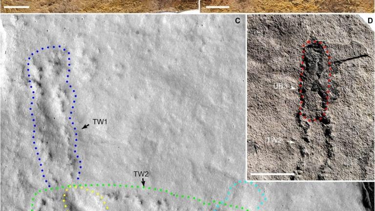 Откриха най-древните досега отпечатъци от стъпки на животно