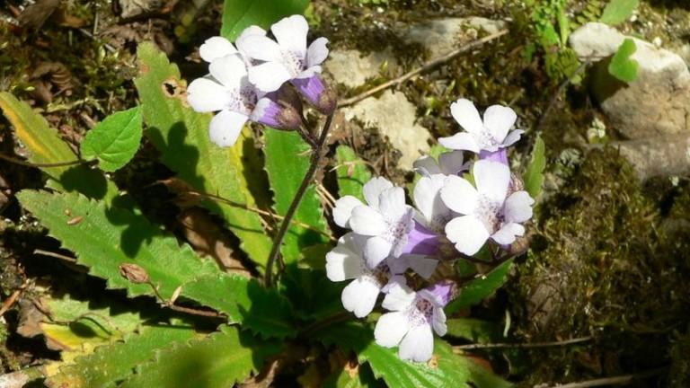 Общо 24 вида билки са забранени за бране в България.