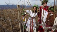 Боговете на виното благословиха и зарязаха лозята край с. Илинденци