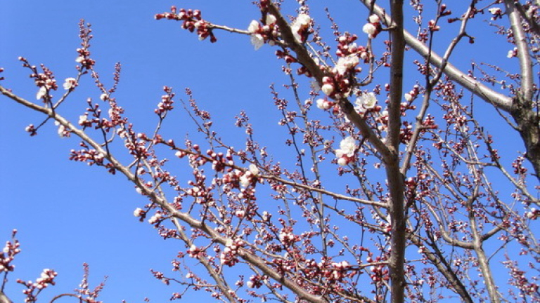 Настъпи астрономическата пролет!