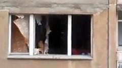 Газова бутилка на кола се взриви в Добрич, собственикът оцеля по чудо
