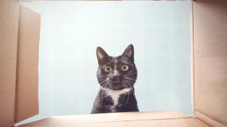Всяка котка да си знае кутията
