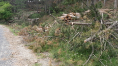 Провериха 43 жилища и 60 души за незаконна дървесина в Гурково