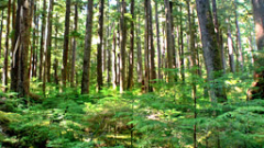 Обезлесяването на Амазонка се увеличило