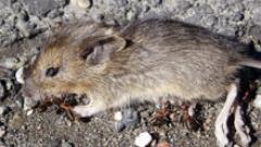 Оставяли отровата за мишки под детските легла в дома в Пловдив