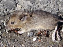 Неправоспособен слагал отровата за мишки в пловдивския детски дом