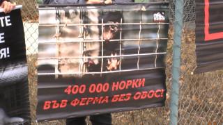 Г-н Борисов, помогнете ни, зоват активисти срещу добива на ценни кожи пред МС