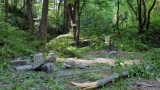 Отстраняват опасните дървета в Шумен