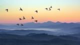 Климатичните промени, птиците, рибите и как се отразяват на животните