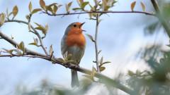 Песента на птиците е мехлем за душата