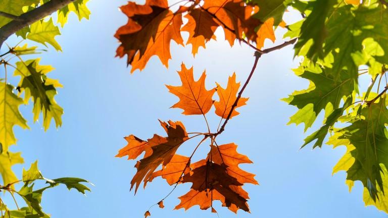 Денят ще бъде предимно слънчев, без валежи максималните температури на