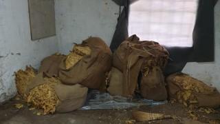 Полицаи иззеха 5400 кг тютюн по време на спецакция в Ихтиман