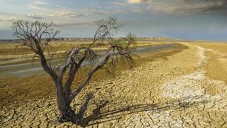 Климатичните промени и селското стопанство: Губи Индия, печели Канада