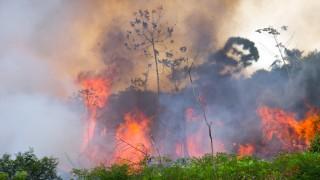 Истинската причина за пожарите в Амазония