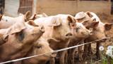 Област Перник е санитарна зона заради чумата
