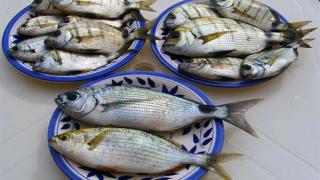 В рибния бранш има конфликт на интереси, според ДСБ