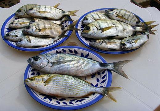 Прясната риба изчезна в Бургас