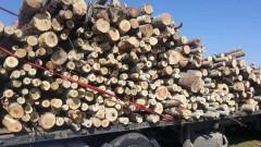 Жители на три странджански села недоволстват срещу камиони с дърва