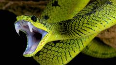 Ето какво се случва, когато ни ухапе отровна змия