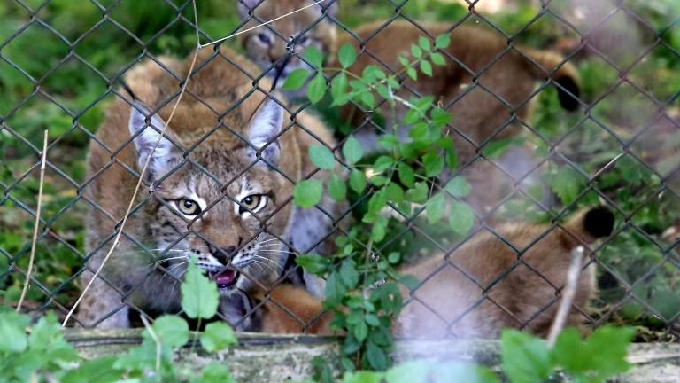 Рисовете в България ще изчезнат ако няма закон за опазването