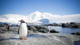 Заради климатичните промени избуява зеленина на Антарктида