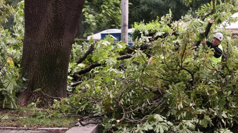 И в Шумен буря повали дървета