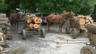 Лесничеите: Не купувайте дърва от леки автомобили
