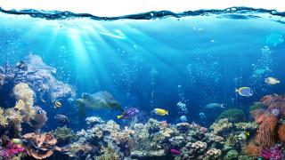 Нарастването на CO2 на планетата уврежда живота в моретата
